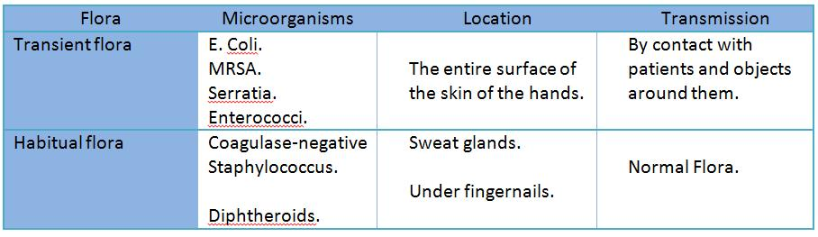 Types of flora on hands